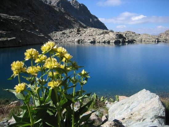 La lagho Forcioline