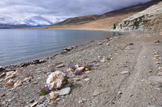 Tsomo Riri : Sur la plage abandonnée...