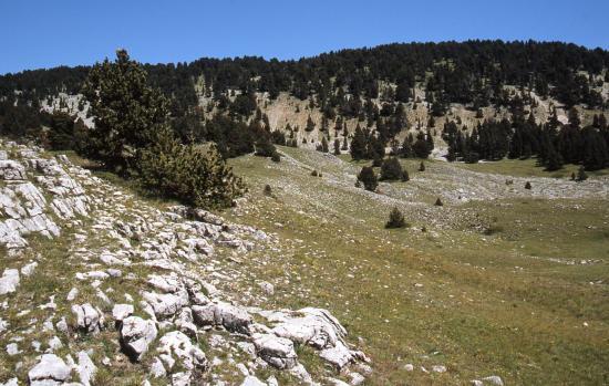 Sur le plateau du côté de la bergerie du Roi
