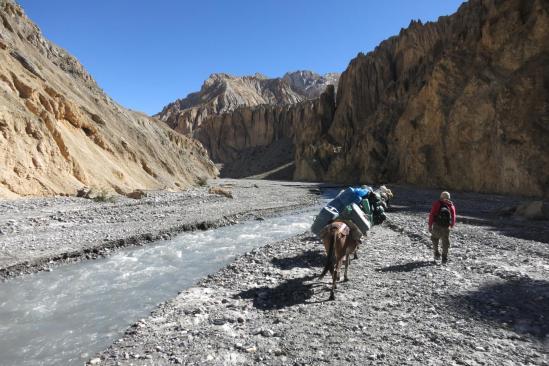 Convoi de mules dans la Chaka khola