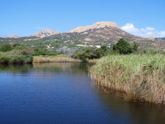 L'embouchure de l'Ostriconi