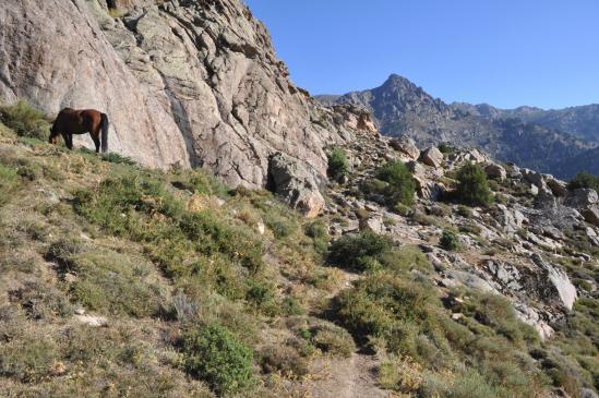 Dans la descente vers Corscia