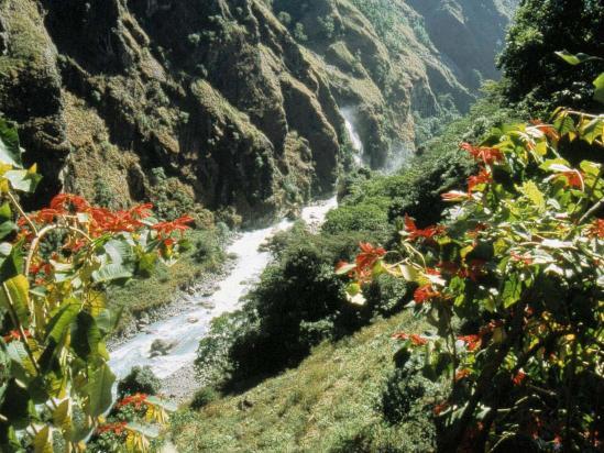 Végétation tropicale du les coteaux de la Marsyangdi khola du côté de Chyamje