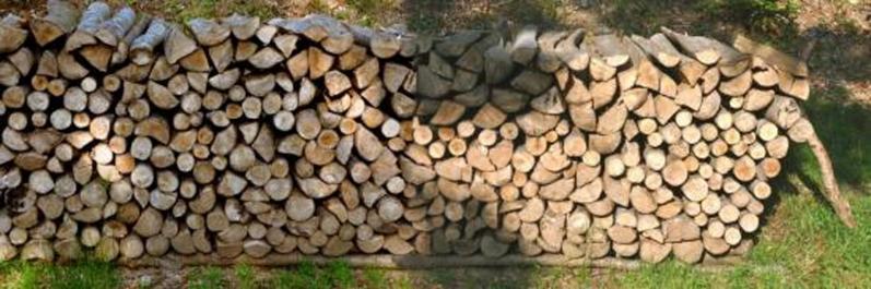 Rondins de bois en forêt